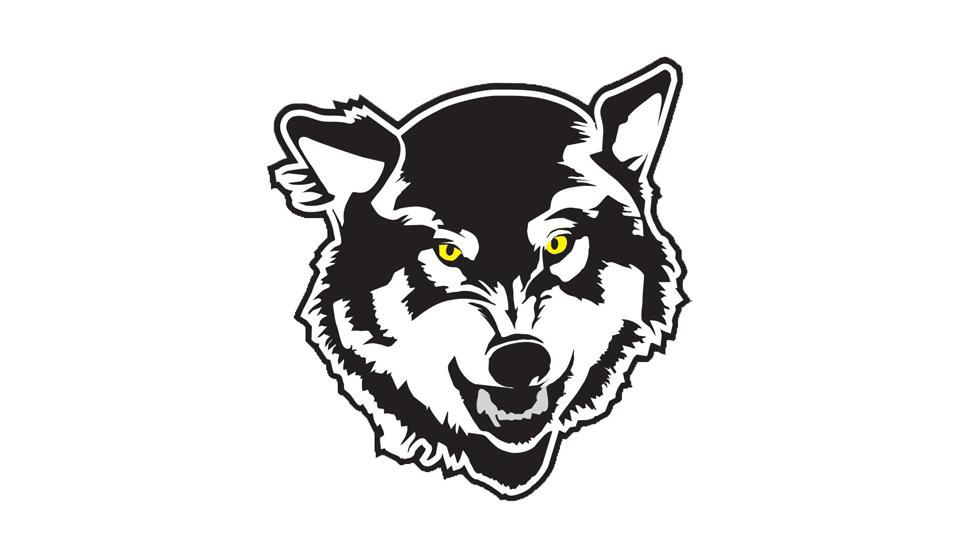 Wolfskopf auf Weiss